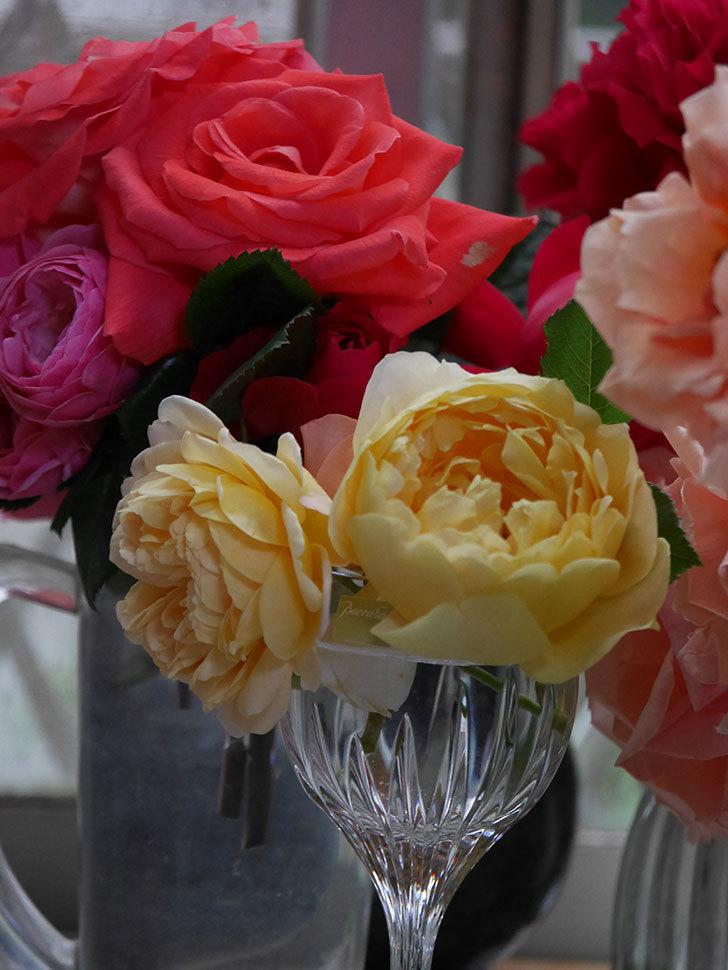 雨予報だったので咲いているバラを切り花にした。2020年-048.jpg