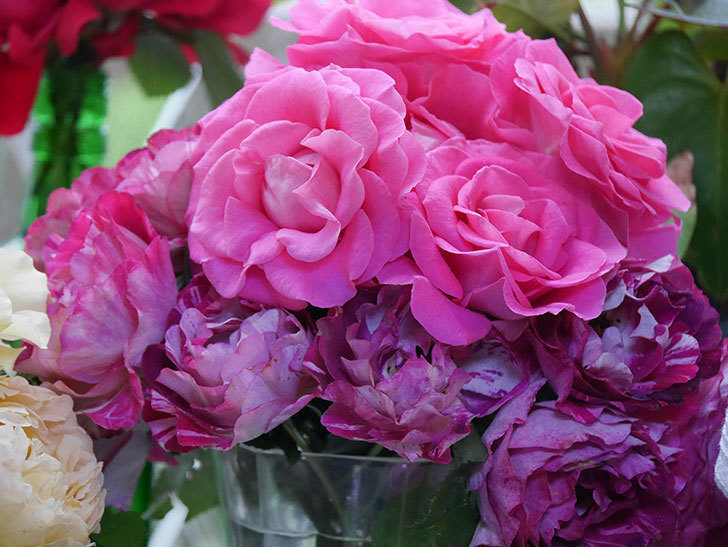 雨予報だったので咲いているバラを切り花にした。2020年-050.jpg