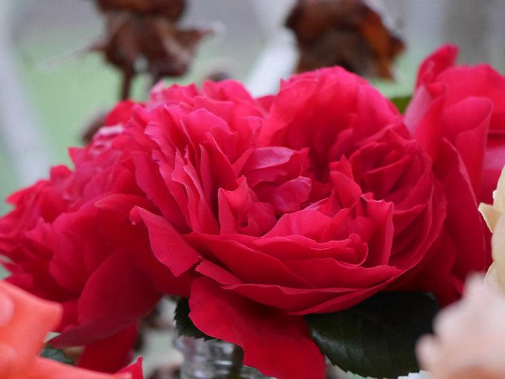 雨予報だったので咲いているバラを切り花にした。2020年-052.jpg