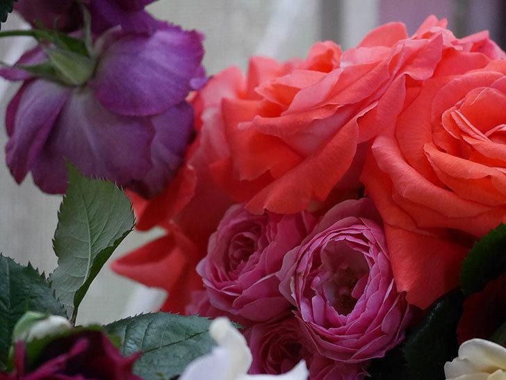 雨予報だったので咲いているバラを切り花にした。2020年-053.jpg