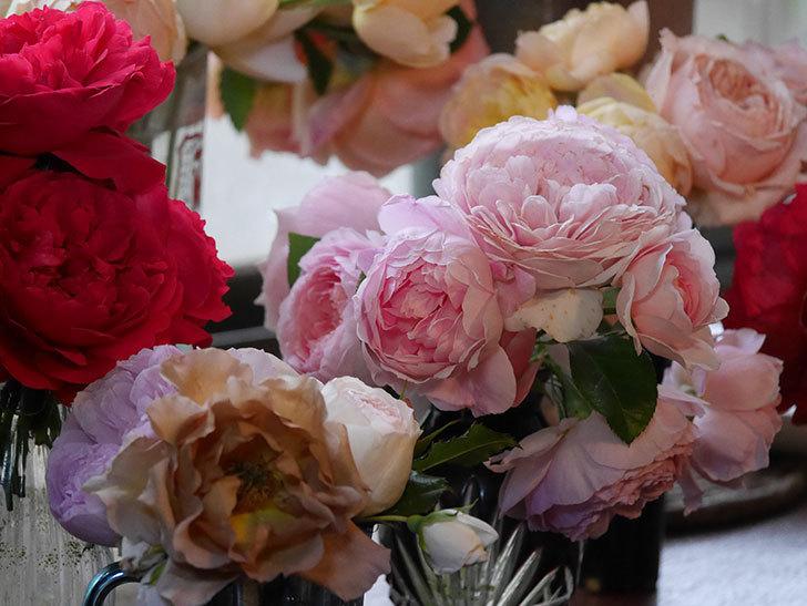 雨予報だったので咲いているバラを切り花にした。2020年-056.jpg
