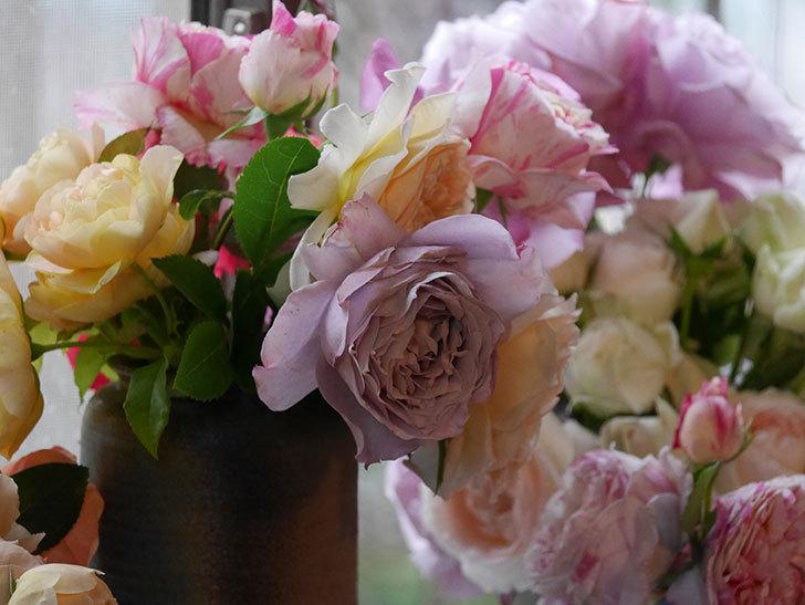 雨予報だったので咲いているバラを切り花にした。2020年-057.jpg
