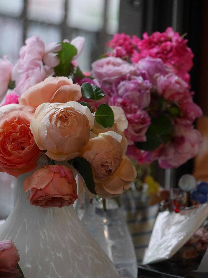 雨予報だったので咲いているバラを切り花にした。2020年-060.jpg