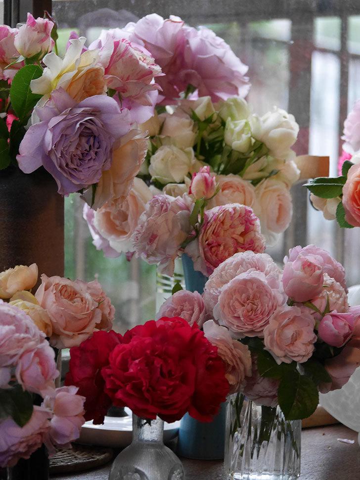 雨予報だったので咲いているバラを切り花にした。2020年-064.jpg
