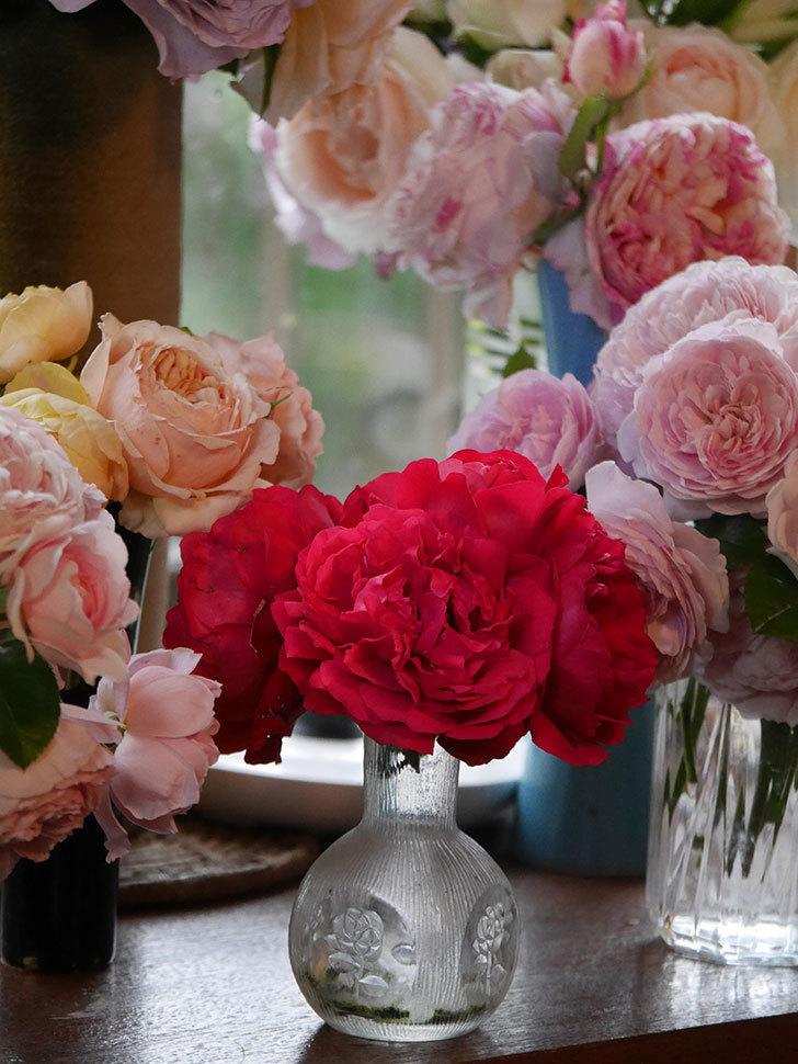 雨予報だったので咲いているバラを切り花にした。2020年-065.jpg