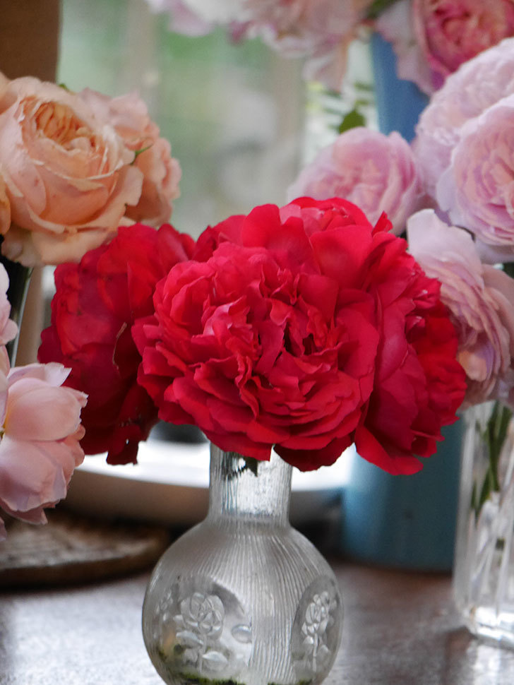 雨予報だったので咲いているバラを切り花にした。2020年-066.jpg