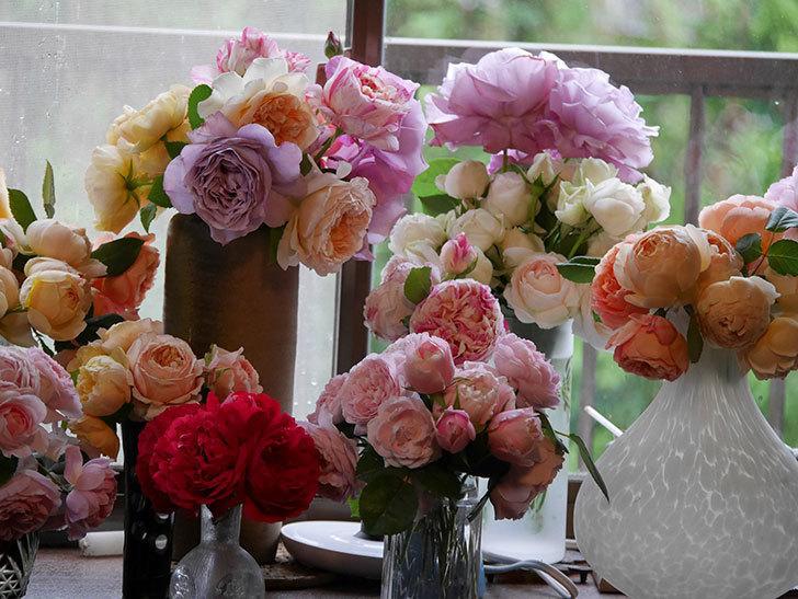 雨予報だったので咲いているバラを切り花にした。2020年-069.jpg
