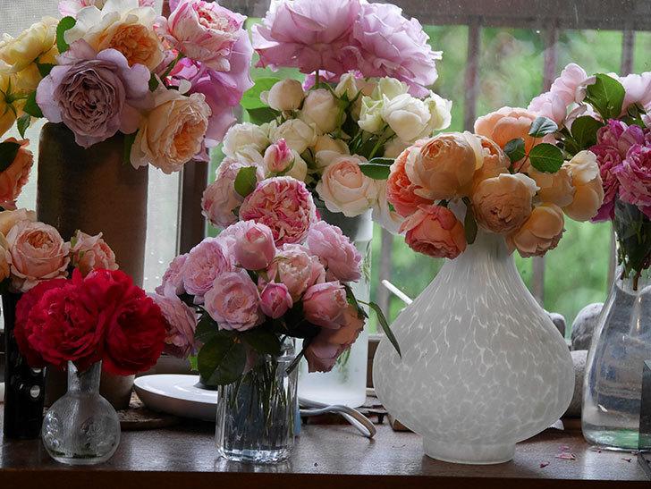 雨予報だったので咲いているバラを切り花にした。2020年-070.jpg