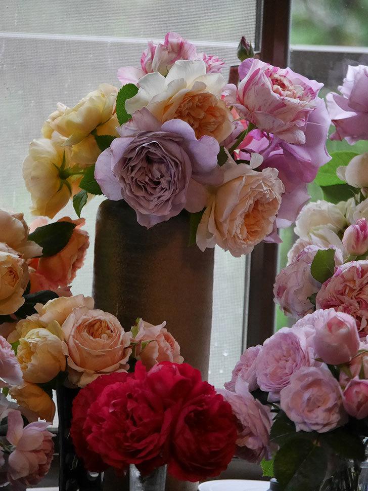 雨予報だったので咲いているバラを切り花にした。2020年-074.jpg