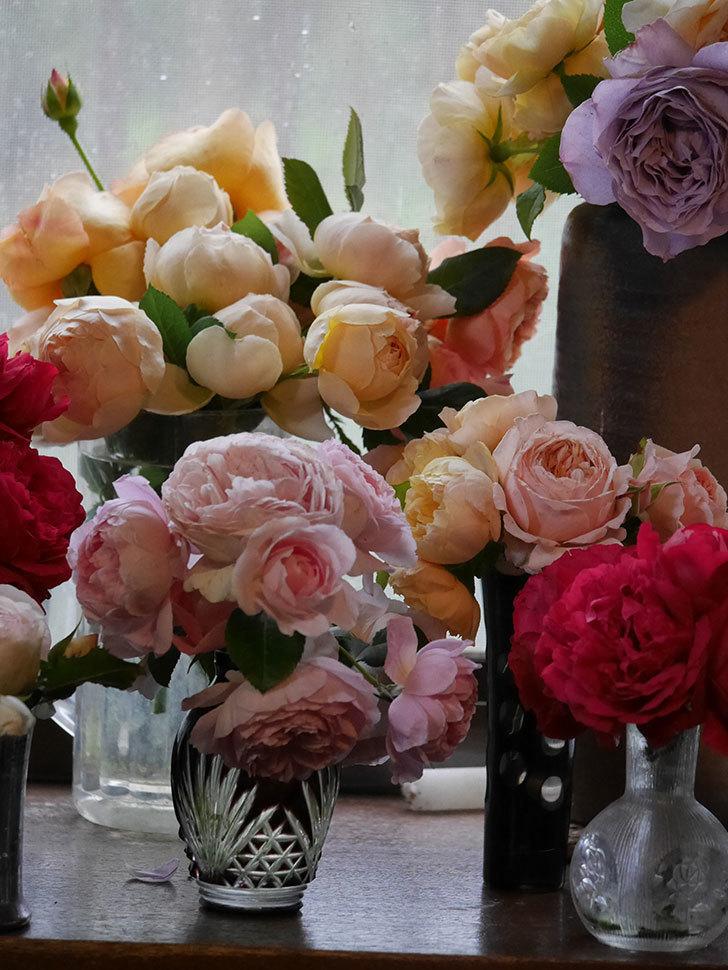 雨予報だったので咲いているバラを切り花にした。2020年-075.jpg