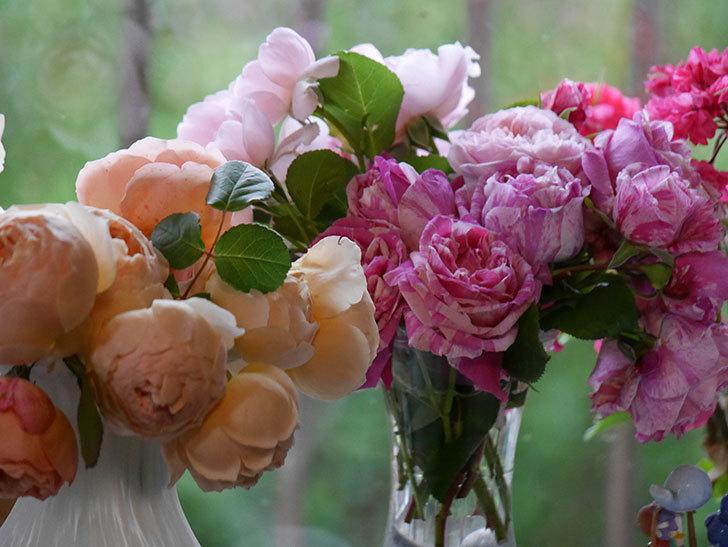 雨予報だったので咲いているバラを切り花にした。2020年-077.jpg