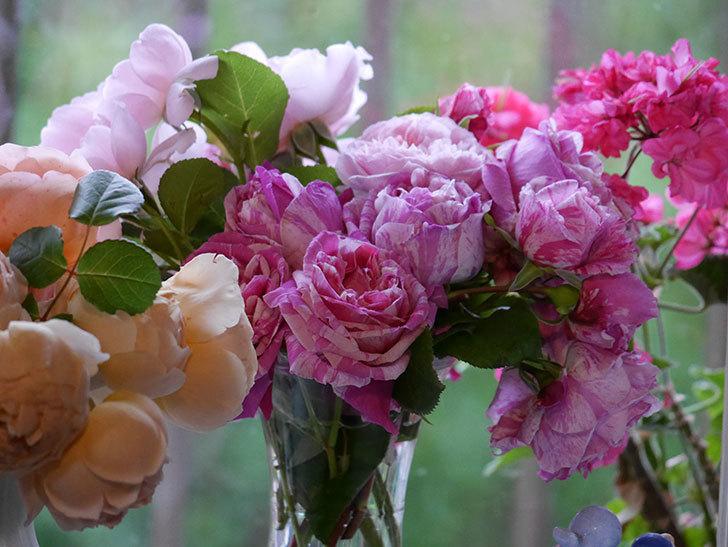 雨予報だったので咲いているバラを切り花にした。2020年-078.jpg