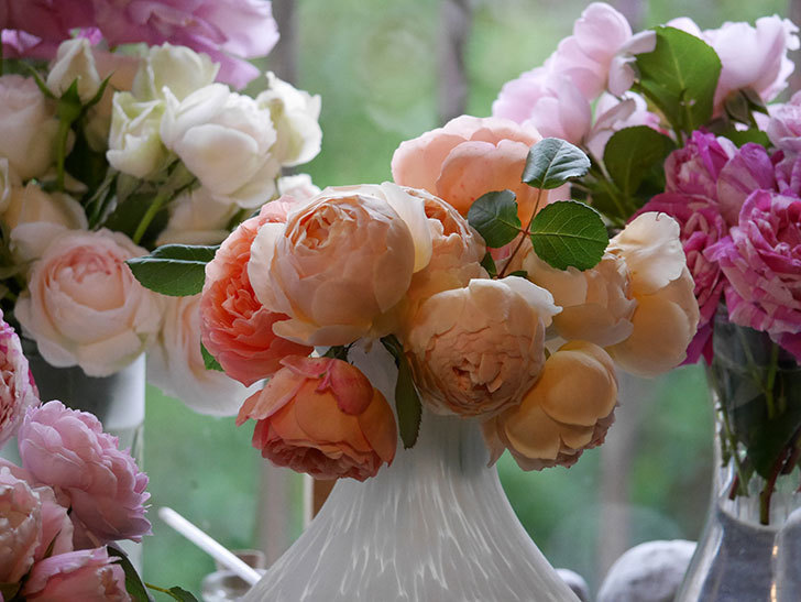 雨予報だったので咲いているバラを切り花にした。2020年-079.jpg