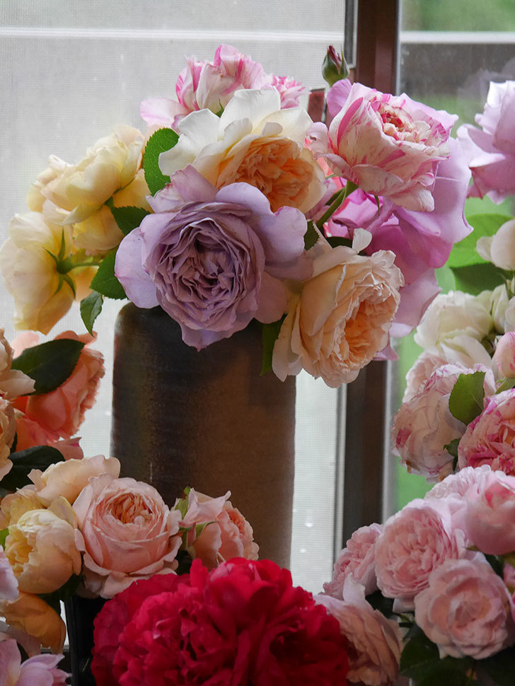 雨予報だったので咲いているバラを切り花にした。2020年-083.jpg