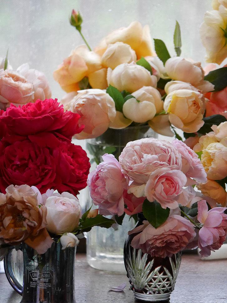 雨予報だったので咲いているバラを切り花にした。2020年-084.jpg