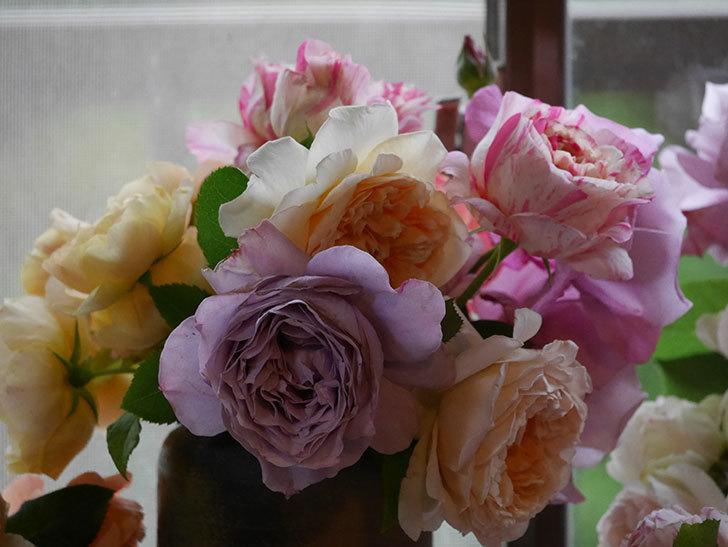 雨予報だったので咲いているバラを切り花にした。2020年-085.jpg