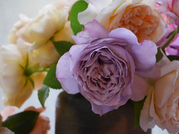 雨予報だったので咲いているバラを切り花にした。2020年-086.jpg