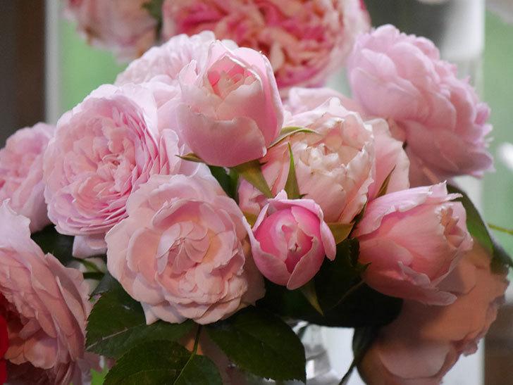 雨予報だったので咲いているバラを切り花にした。2020年-088.jpg