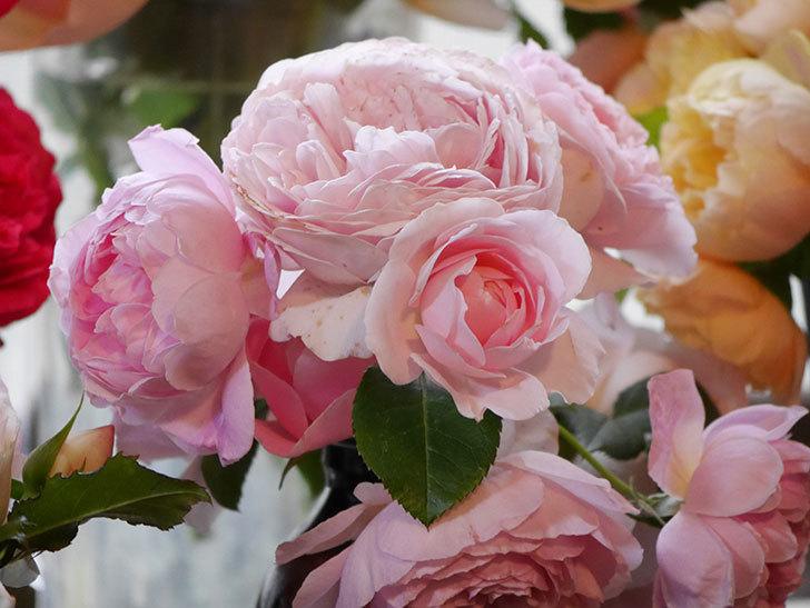 雨予報だったので咲いているバラを切り花にした。2020年-089.jpg