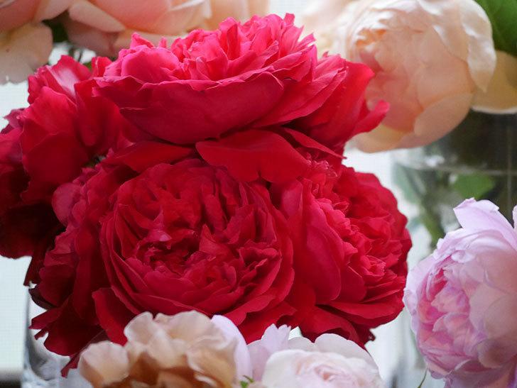 雨予報だったので咲いているバラを切り花にした。2020年-090.jpg
