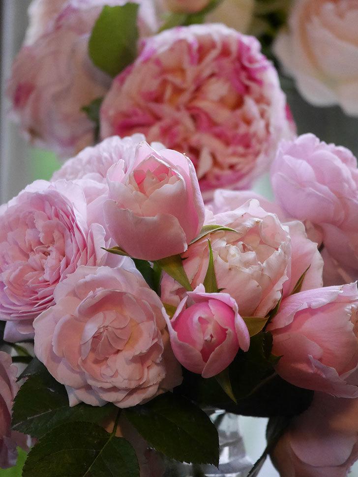 雨予報だったので咲いているバラを切り花にした。2020年-092.jpg
