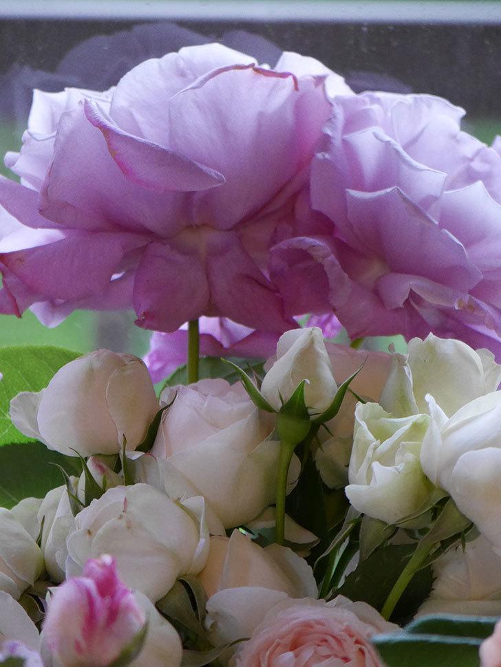 雨予報だったので咲いているバラを切り花にした。2020年-094.jpg