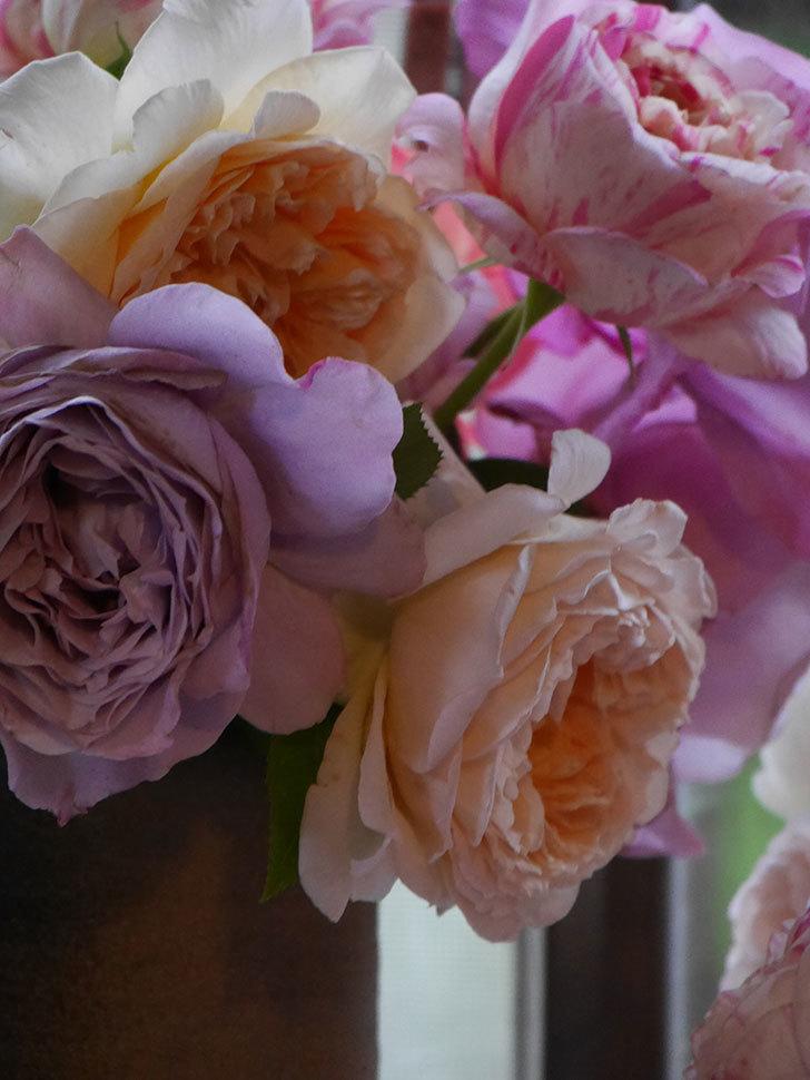 雨予報だったので咲いているバラを切り花にした。2020年-095.jpg