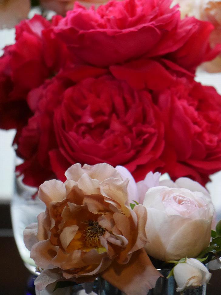 雨予報だったので咲いているバラを切り花にした。2020年-096.jpg