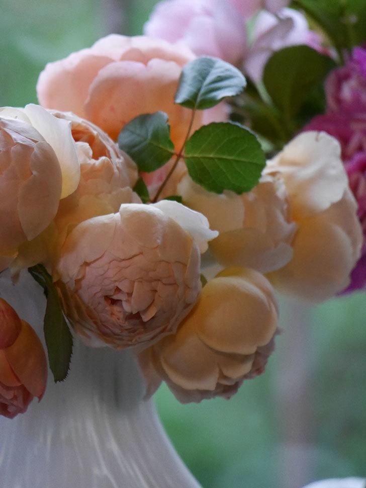 雨予報だったので咲いているバラを切り花にした。2020年-100.jpg