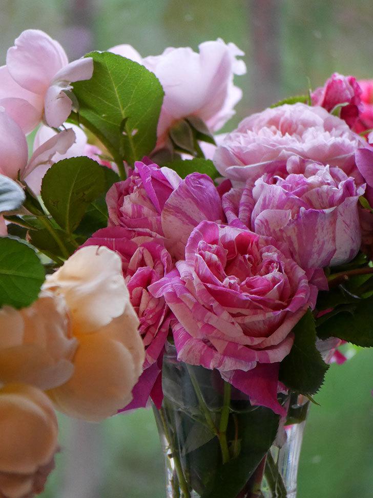 雨予報だったので咲いているバラを切り花にした。2020年-101.jpg
