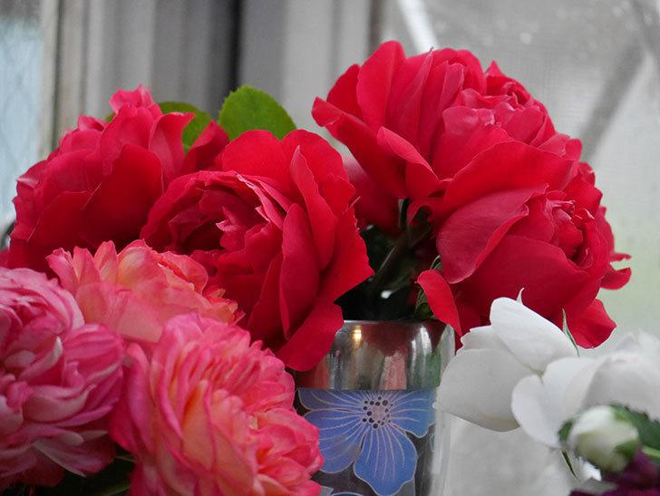 雨予報だったので咲いているバラを切り花にした。2020年-104.jpg