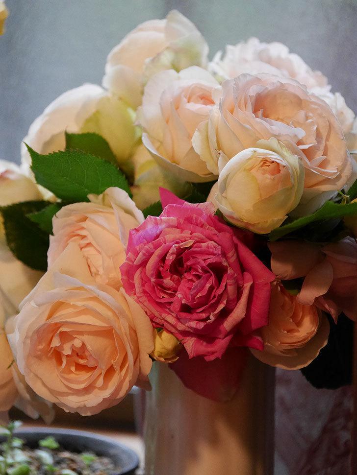 雨予報だったので咲いているバラを切り花にした。2020年-108.jpg