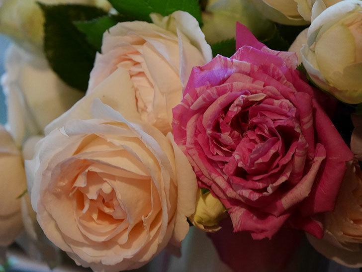 雨予報だったので咲いているバラを切り花にした。2020年-109.jpg