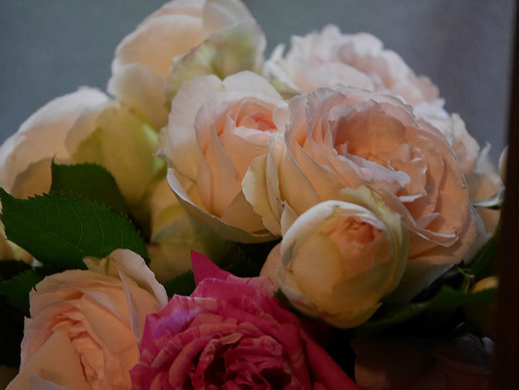雨予報だったので咲いているバラを切り花にした。2020年-110.jpg