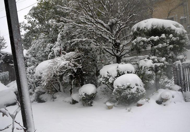 雪が凄くで荷物を配達できなとヤマトから連絡がきた1.jpg