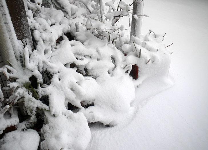 雪が凄くで荷物を配達できなとヤマトから連絡がきた2.jpg