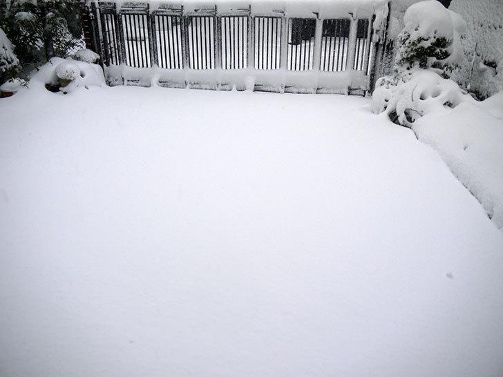 雪が凄くで荷物を配達できなとヤマトから連絡がきた4.jpg