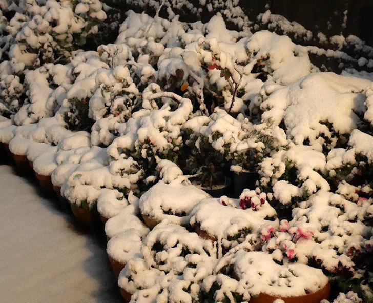 雪で電気が瞬断するのがスゲーうざい。2018年-1.jpg