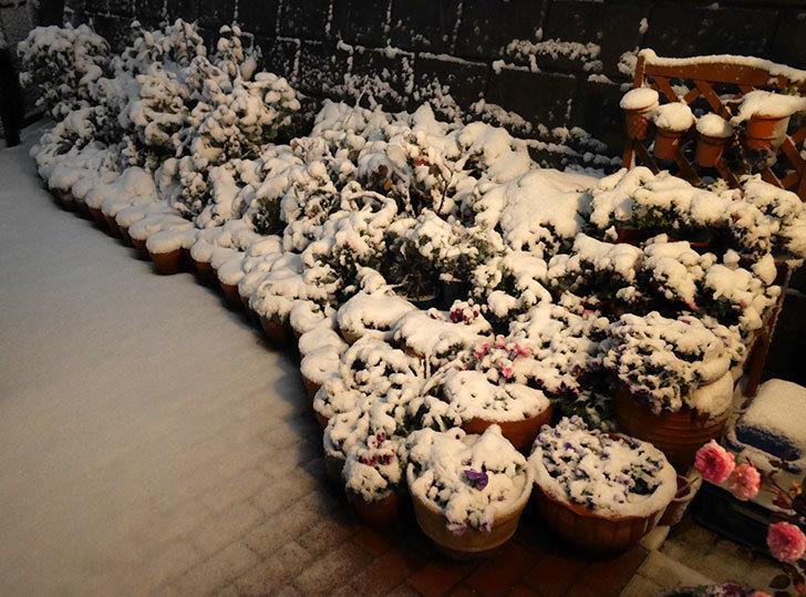 雪で電気が瞬断するのがスゲーうざい。2018年-2.jpg
