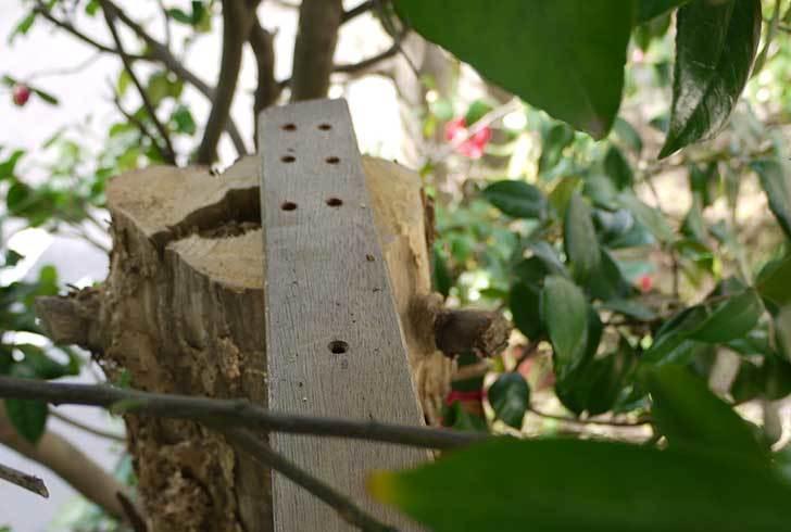 鳥の餌台を作った19.jpg