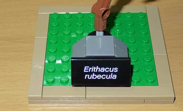 LEGO-21301-世界の鳥-21301を作った1-57.jpg