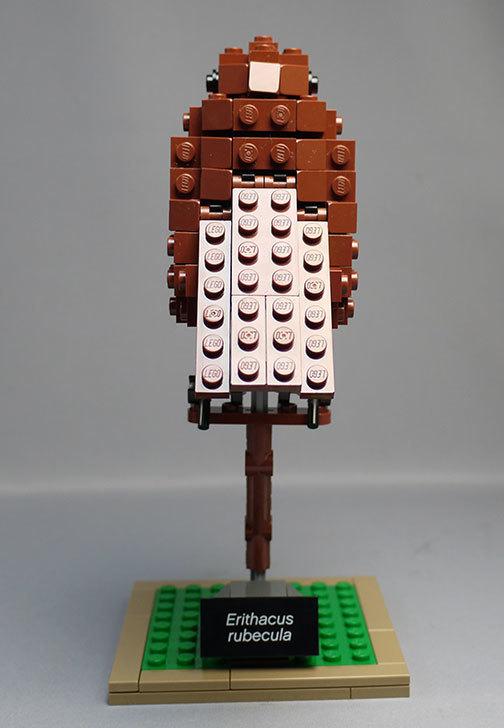 LEGO-21301-世界の鳥-21301を作った1-61.jpg