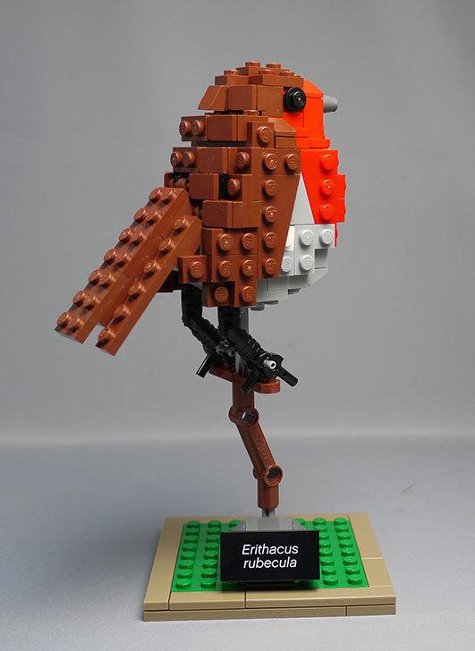 LEGO-21301-世界の鳥-21301を作った1-62.jpg