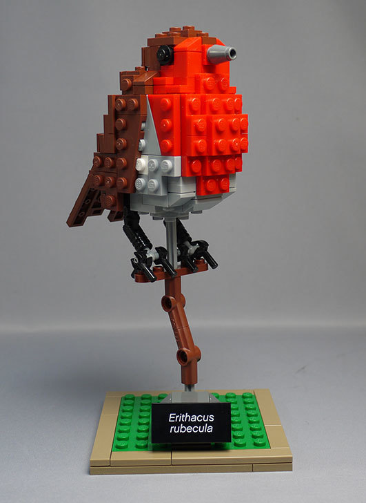 LEGO-21301-世界の鳥-21301を作った1-64.jpg