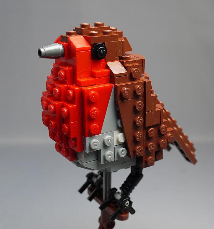 LEGO-21301-世界の鳥-21301を作った1-66.jpg
