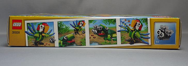 LEGO-31031-熱帯の動物たちが届いた3.jpg