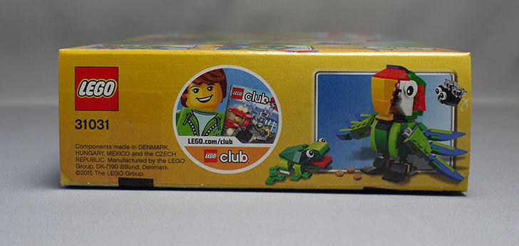 LEGO-31031-熱帯の動物たちが届いた6.jpg