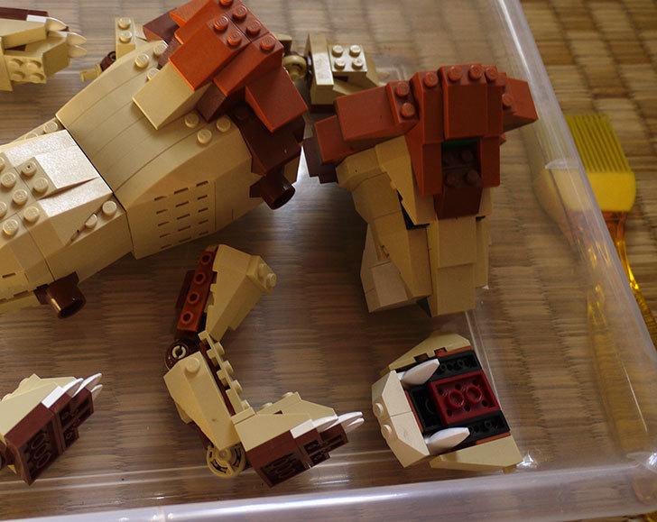 LEGO-4884-ワイルドアニマルの掃除をした7.jpg