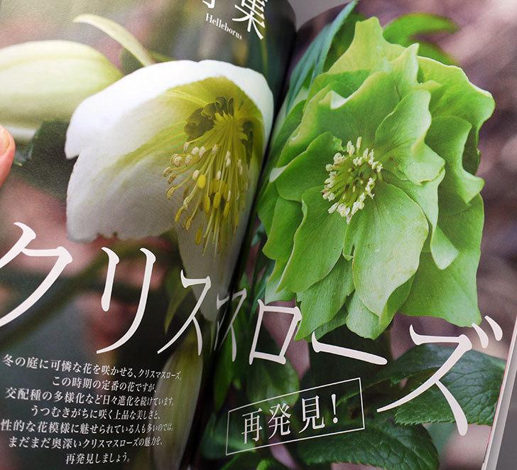 NHKテキスト-趣味の園芸-2017年-1月号を買った2.jpg