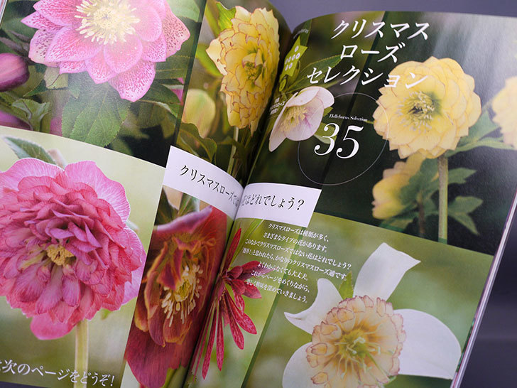 NHKテキスト-趣味の園芸-2017年-1月号を買った3.jpg